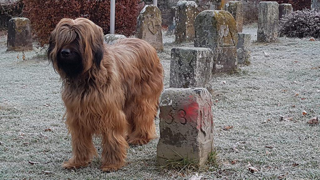 Lia stehend auf der Wiese am Kreuzer in Horb